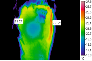 Thermal Imaging Inspection of a Horse's Knee